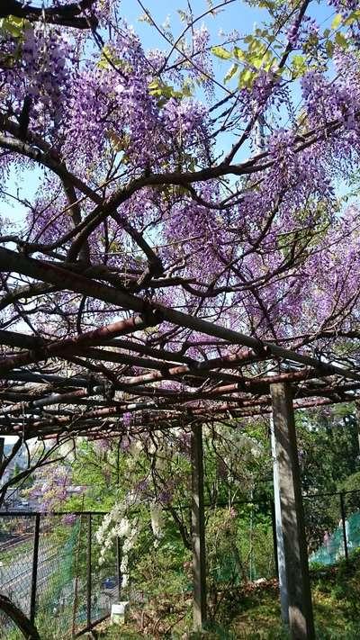 賀茂別雷神社(栃木県多田駅) - 庭園の写真