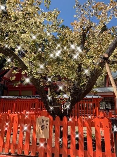 金櫻神社の自然