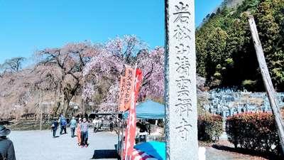 埼玉県清雲寺の写真