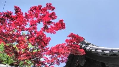 慈受院(京都府)