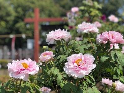 箭弓稲荷神社の庭園