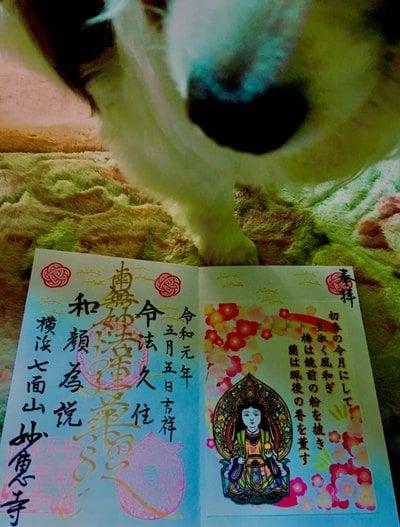 神奈川県妙恵寺の御朱印