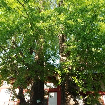 香取神社(東京都新小岩駅) - 未分類の写真