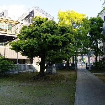 香取神社の建物その他