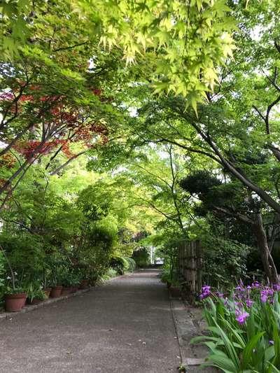 薬師寺の自然