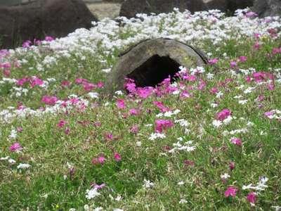 春日神社の近くの神社お寺|総持寺
