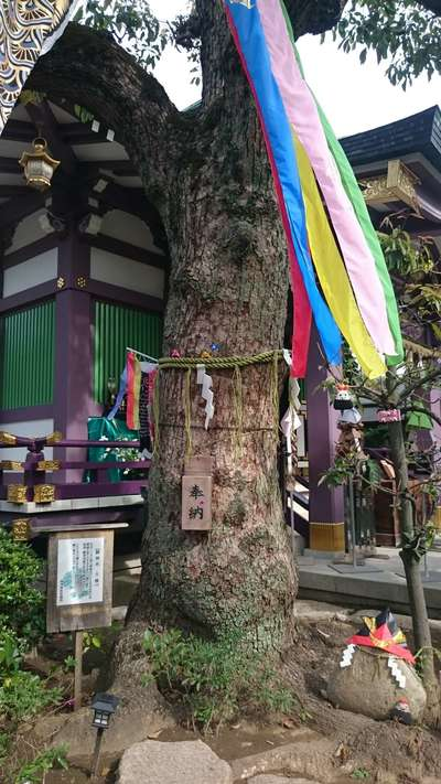 高木神社(東京都曳舟駅) - 自然の写真
