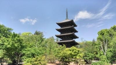 仁和寺(京都府御室仁和寺駅) - 塔の写真