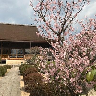 山口県龍福寺の写真