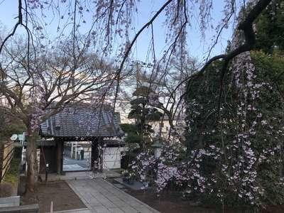金蔵院の山門