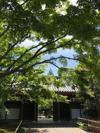 東京都観泉寺の山門