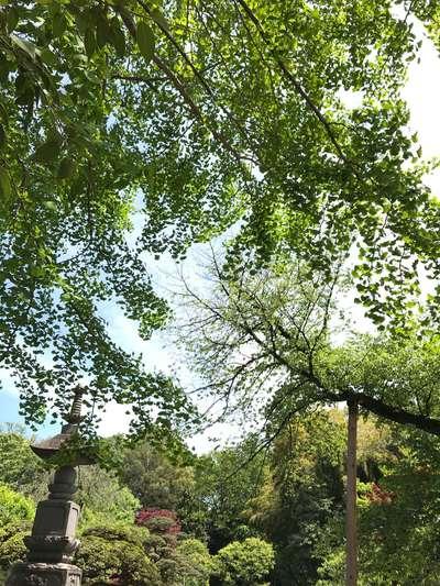 東京都観泉寺の庭園