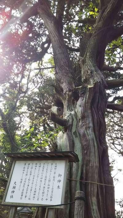 静岡県大瀬神社の写真