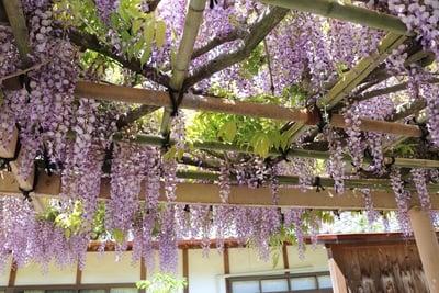 金蛇水神社(宮城県岩沼駅) - 自然の写真