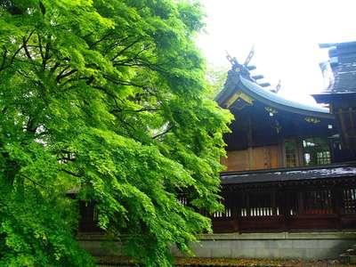 岐阜県岐阜護国神社の本殿