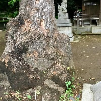 神奈川県熊野神社の写真