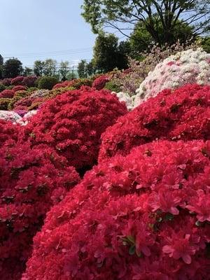 根津神社(東京都根津駅) - 庭園の写真