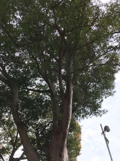 玉前神社の自然
