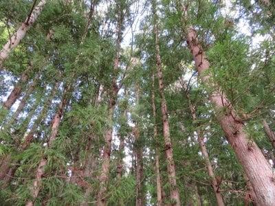 福島県妙養寺の自然