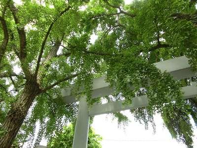 旧稲生神社の近くの神社お寺|波除稲荷神社