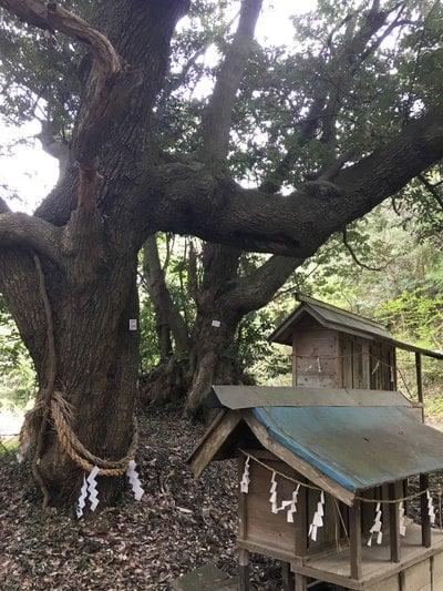 茨城県天志良波神社の写真