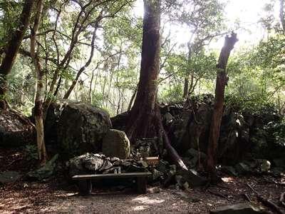 長崎県和多都美神社の写真
