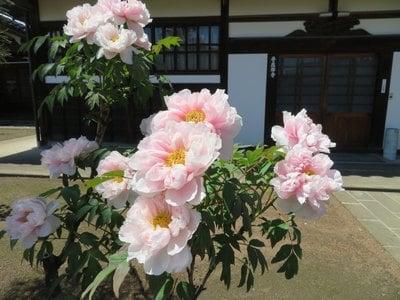 福島県普応寺の庭園