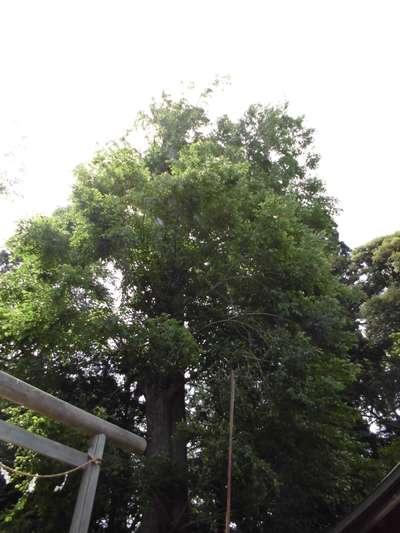 神奈川県深見神社の自然