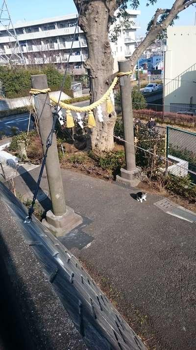 星川杉山神社の鳥居
