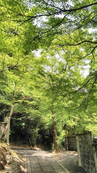 吟松寺(京都府)