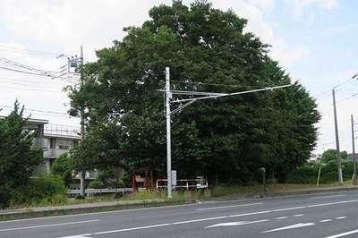 埼玉県稲荷大明神の写真