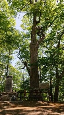 義經神社の自然