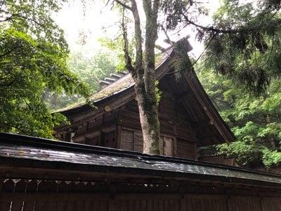 福井県若狭彦神社(上社)の写真