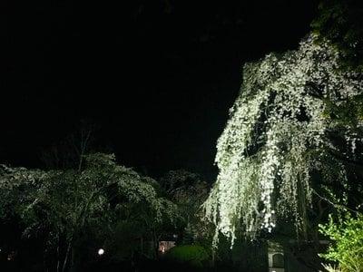 埼玉県中院の写真