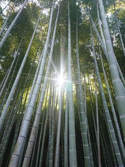 巽神社の近くの神社お寺|英勝寺