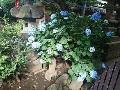 新井薬師寺(梅照院)(東京都)