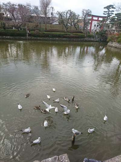 鶴岡八幡宮の動物