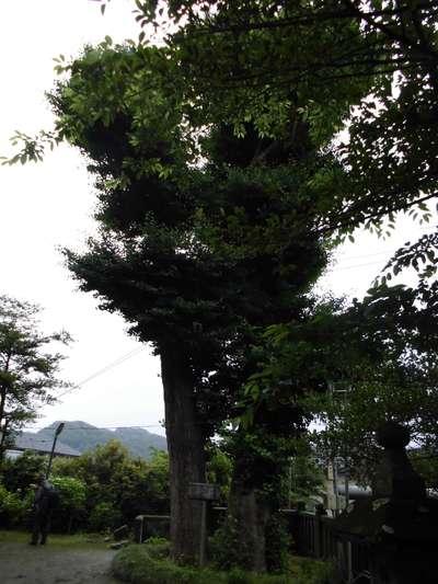 御霊神社の自然