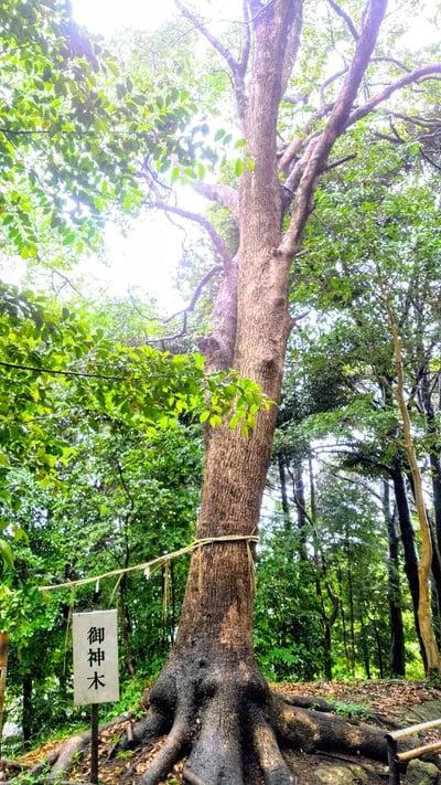 八柱神社の自然