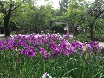 市原稲荷神社の自然
