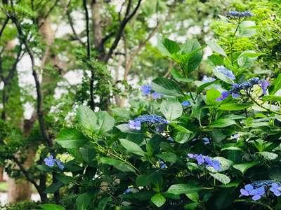 愛知県普元寺の写真
