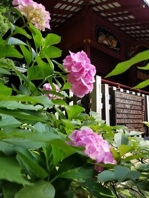 宮益御嶽神社の近くの神社お寺|金王八幡宮