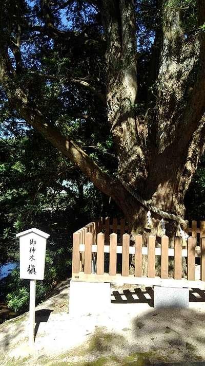安房神社の自然
