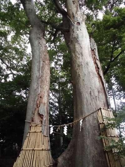 神奈川県倉見神社の自然