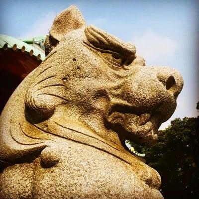 神田神社(神田明神)の狛犬