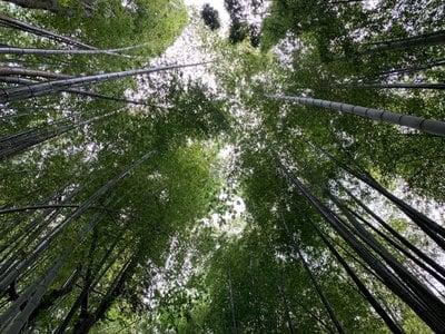 千葉県妙提寺の写真