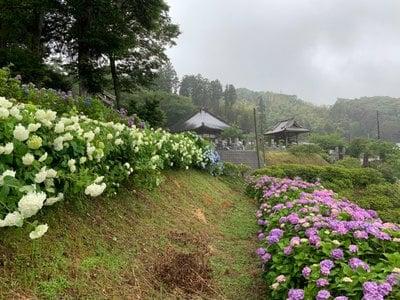 妙提寺(千葉県)
