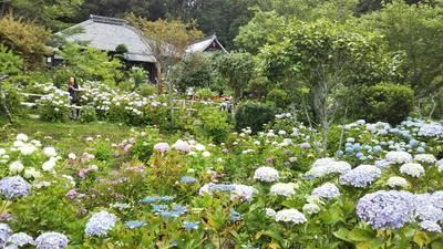 極楽寺の庭園