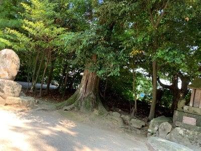 八重垣神社の自然