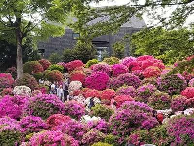 根津神社の庭園